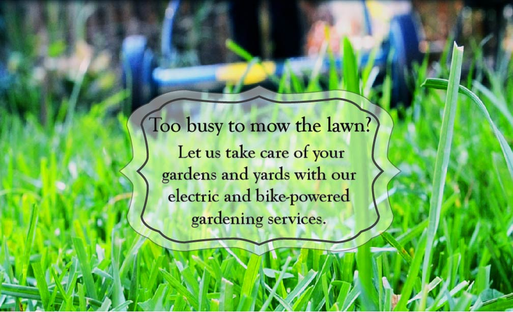 Customized lawn care packages to meet your needs